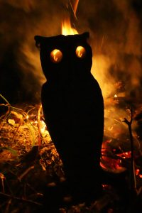 Fire-iron owl.