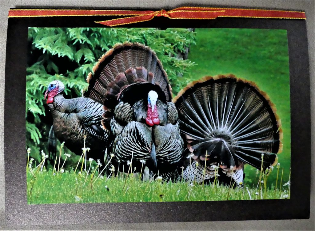 turkeys on Thanksgiving card