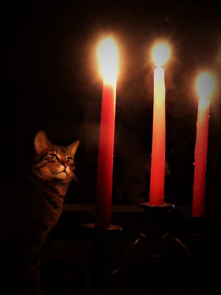 Leo in candlelight
