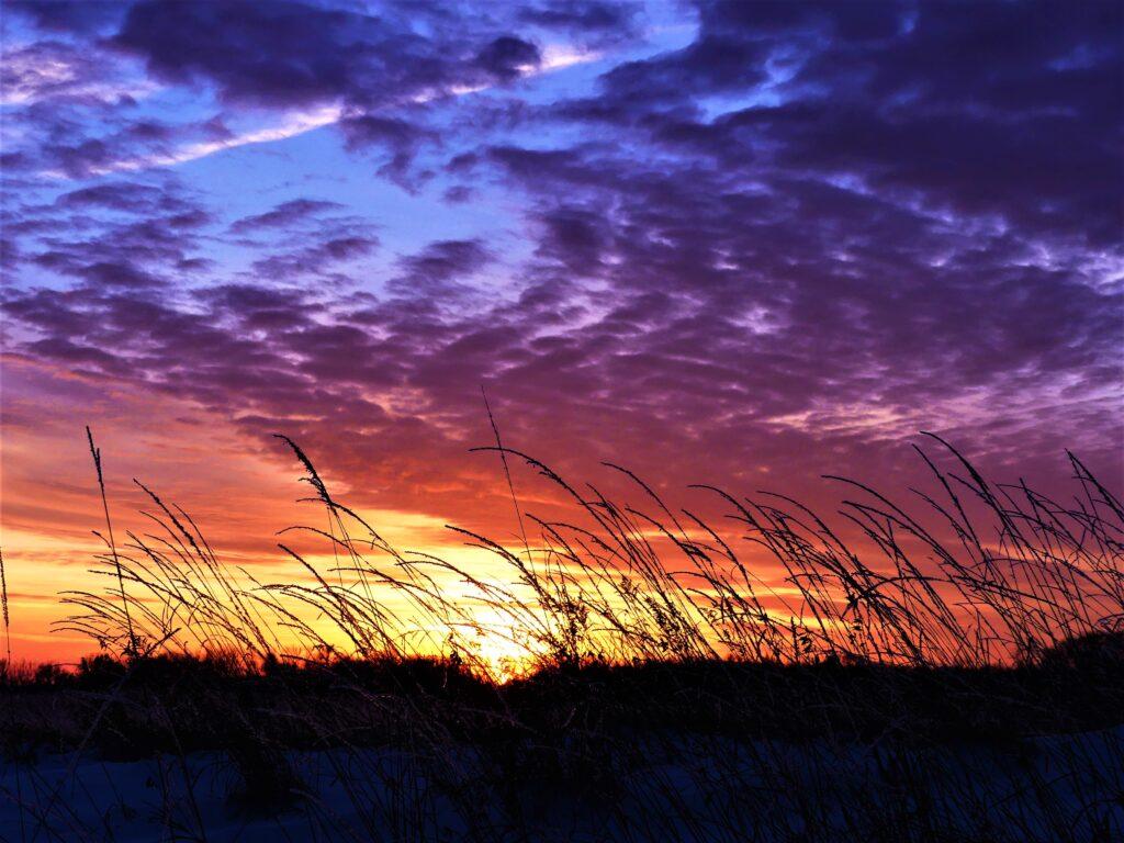 sunrise of compassion