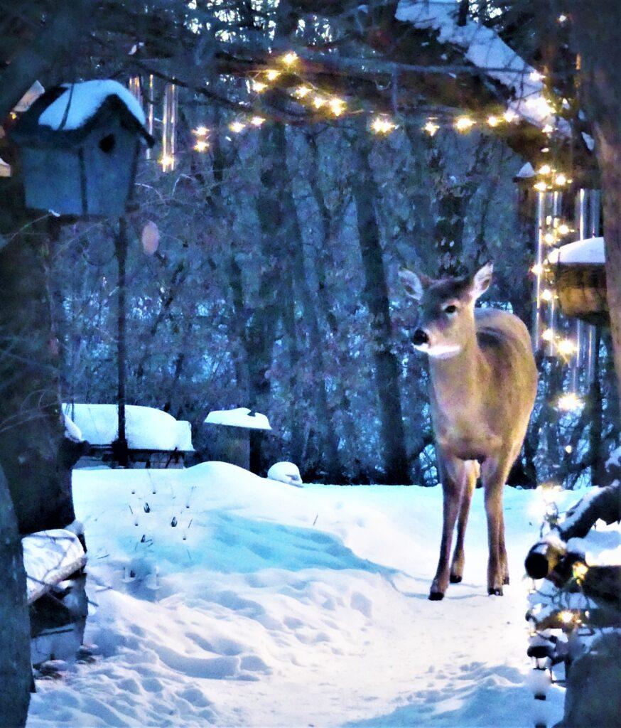 deer in arbor lights